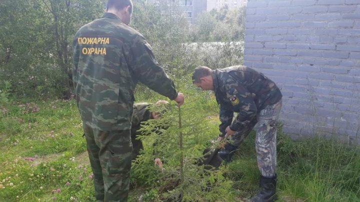 В рамках проведения акции «100 деревьев к 100-летию», работники пожарных частей Оленегорского филиала ГПС МО высадили деревья на территориях пожарных подразделений